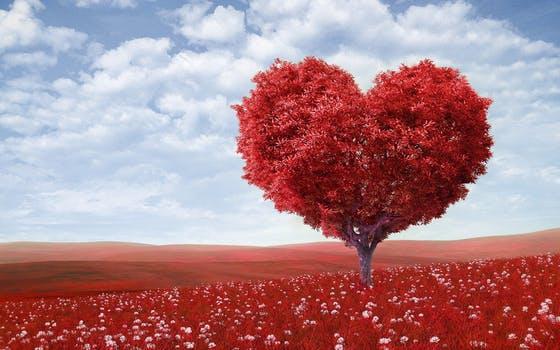 mediatacion amor